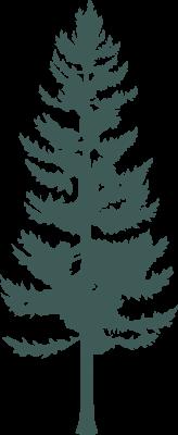 PINE_TREES_C